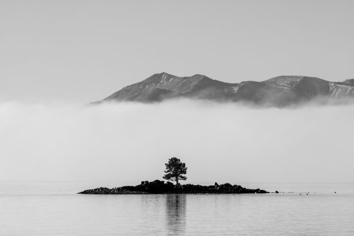 Lonely tree on an island